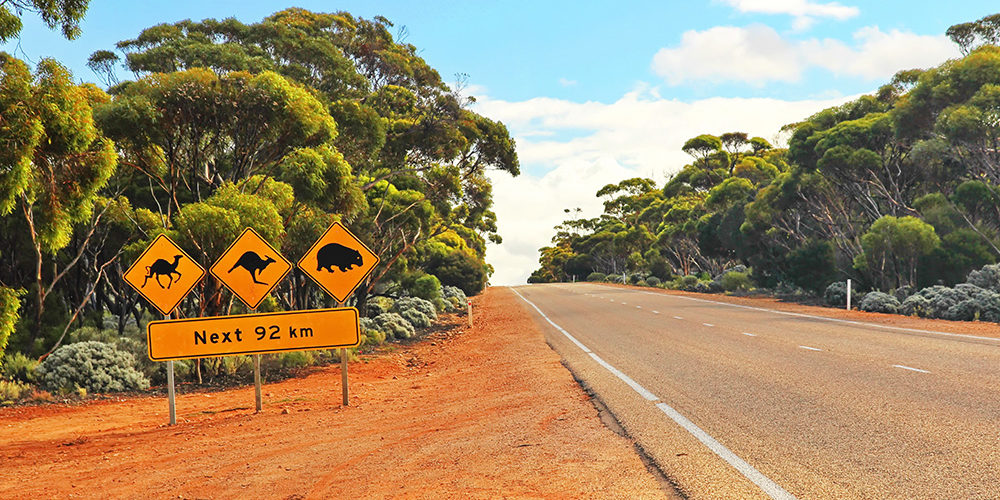 Crossing the Nullarbor in Australia, with a street sign with various Australian wildlife