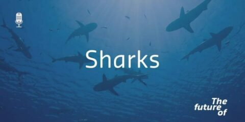The Future Of: Sharks