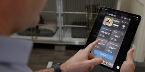 Tiny microchip to keep pets safe crowned a Curtinnovation winner